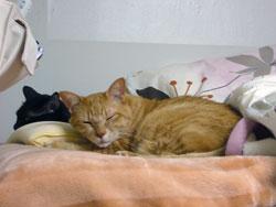 今日のネコ:お休み中
